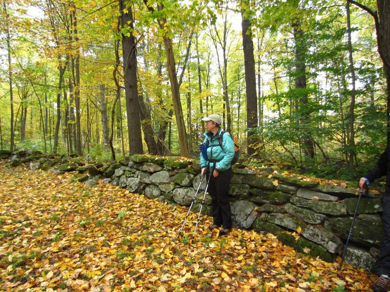 Hiker with poles sitting on rock wall in woods with leaves on ground surrounded by tall trees.