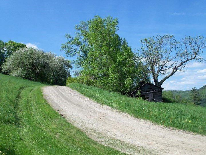 Dirt trails surrounded by plush green trees and grass with blue sky and fluffy white clouds in background.