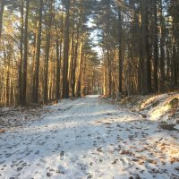 Snow-covered trail with footprints going through tall bare trees.