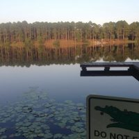 Mossy lake with dock and Alligator WarningSign with tall trees in distance.