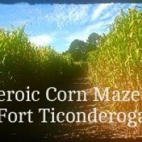 Dirt path through tall Corn Maze at Fort Ticonderoga with Clear blue sky, fluffy clouds and trees in the distance