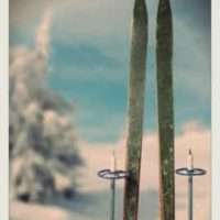 Skis and poles sitting upright in snow, snow-covered tree with blue sky in the distance.