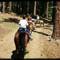 Group of men and women riding horses along a dirt trail, tall trees on both sides of path.