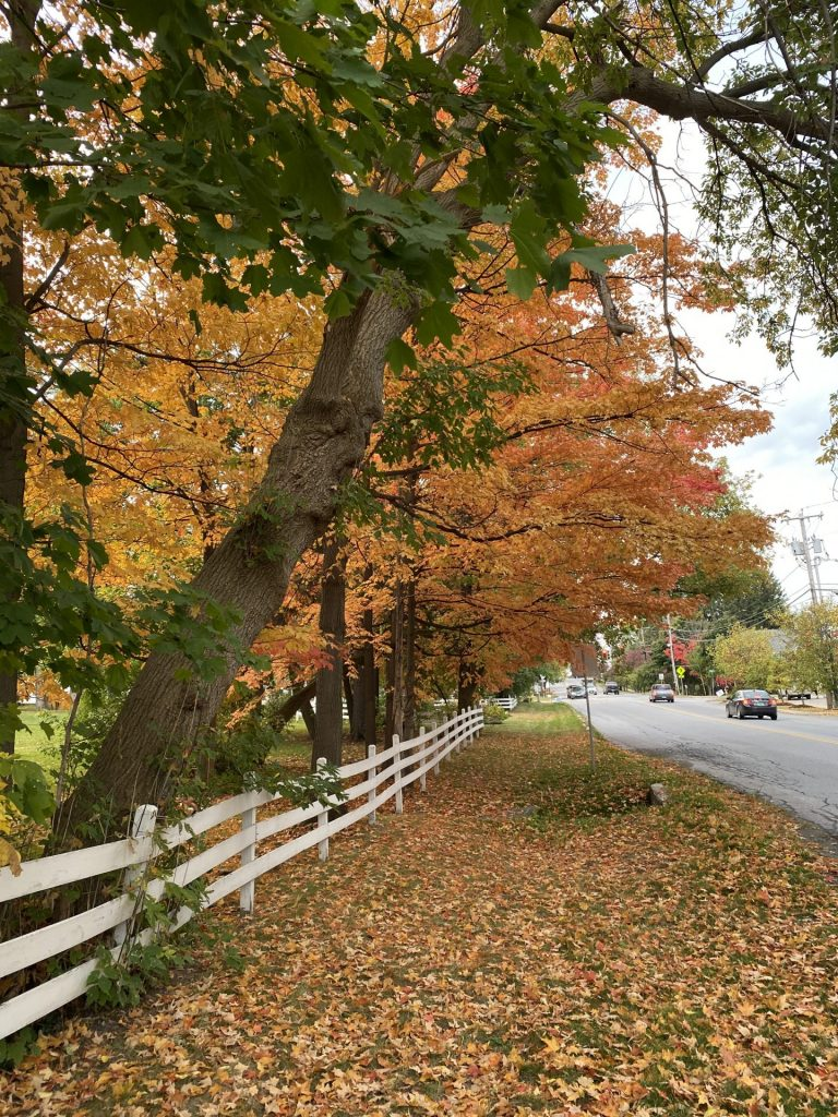 Fall foliage in Middlebury VT