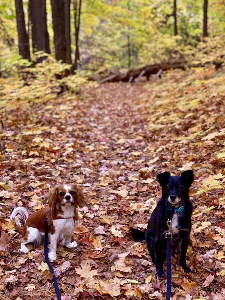 two dogs on fall hiking trail